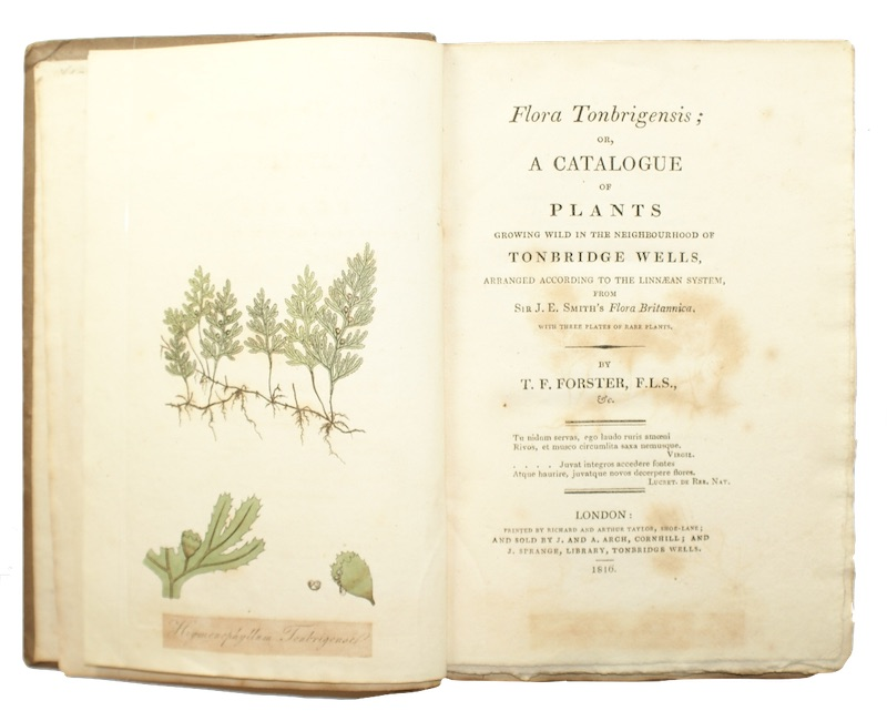"Photo of ""Flora Tonbrigensis; or, a catalogue ..."""
